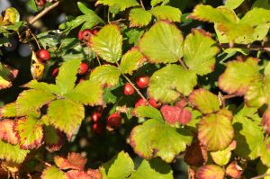 autumn equinox colours of fruits and leaves cornwall hypnotherapy